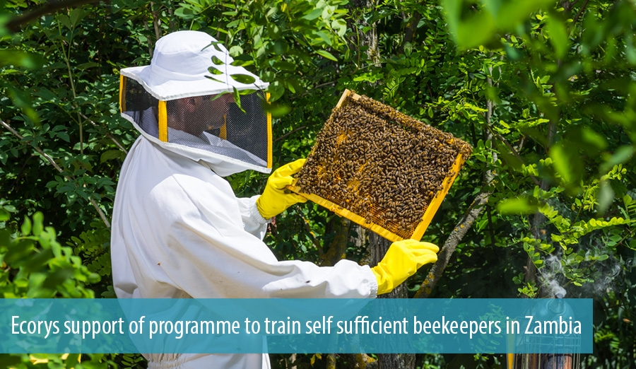 Ecorys support of programme to train self sufficient beekeepers in Zambia