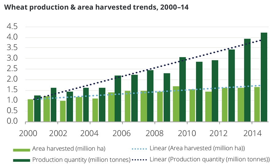 Wheat production and harvested area