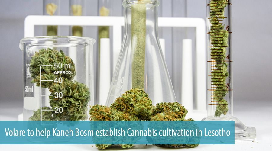 Volare to help Kaneh Bosm establish Cannabis cultivation in Lesotho
