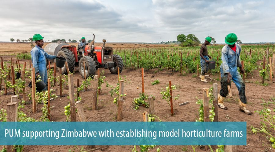 PUM supporting Zimbabwe with establishing model horticulture farms