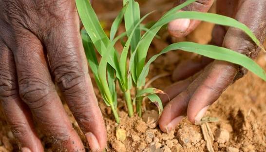 Africa's agricultural sector requires foreign investment to realise its potential